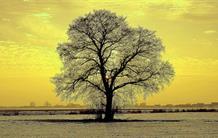 Quand un gaz soufré espionne la photosynthèse