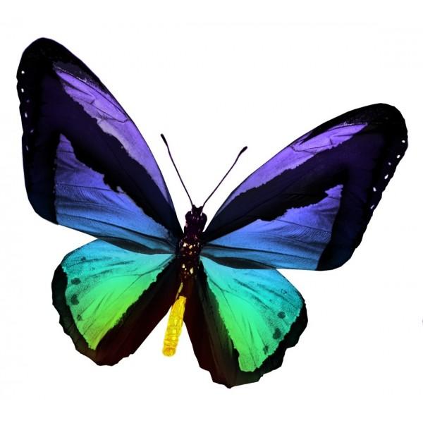 Un papillon encore plus turbulent - Images de papillon ...