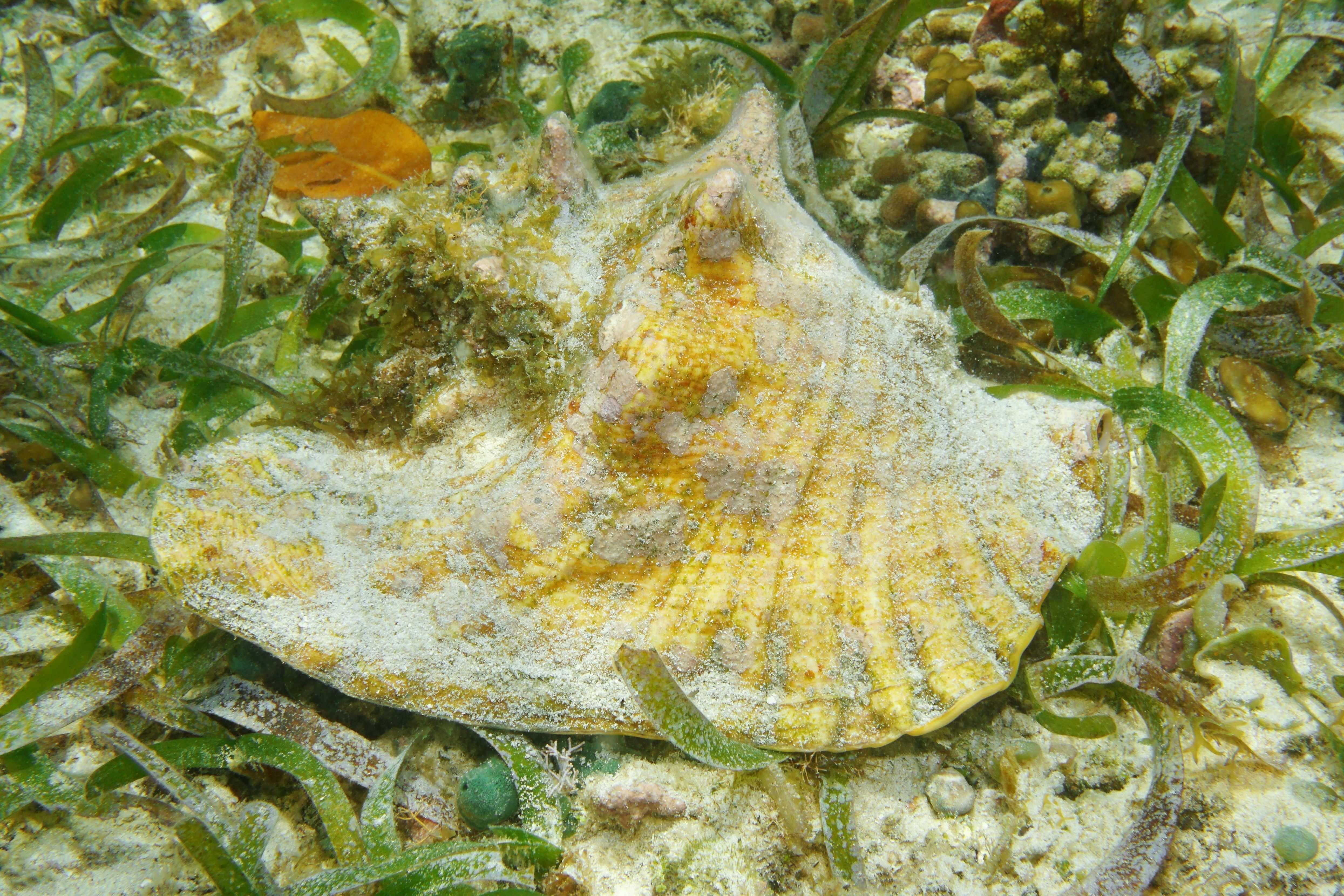 Acidité des océans :  variations saisonnières plus marquées