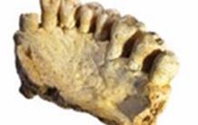 Les premiers hommes modernes découverts hors d'Afrique