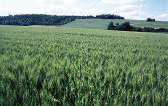 Evénements climatiques extrèmes et rendements du blé