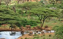 Eléphants de forêt et stocks de carbone dans la biomasse