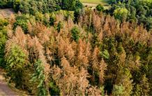 Plus que la température de l'air, l'humidité des sols régule l'absorption du carbone par la végétation