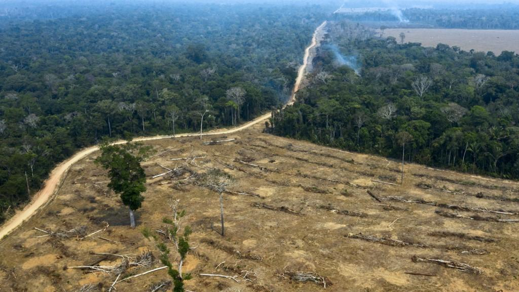 Brazil: Amazonian forest net carbon emitter between 2010 and 2019