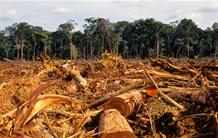 The Brazilian Amazon rainforest has been losing its carbon stock over the past decade