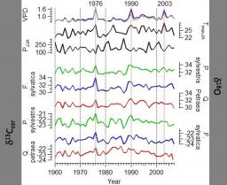 Comparisons of the performance of  δ13C and δ18O of F. sylvatica, P. sylvestris and Q. petraea in the record of past climate variations