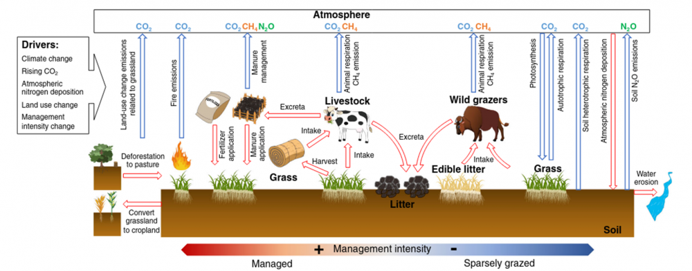 Climate warming from managed grasslands cancels the cooling effect of carbon sinks in sparsely grazed and natural grasslands