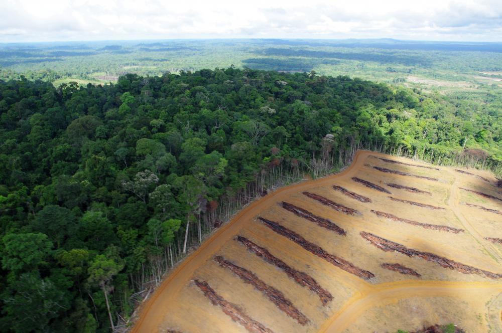 Controls on land biogeochemical cycling